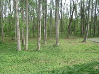 Woodland Hills Park Winston-Salem, NC Woods Near Pool