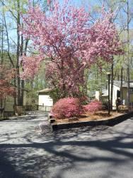 Spring Woodland HIlls